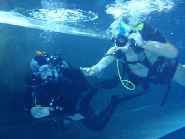 Limanowa nurkowanie Sealion