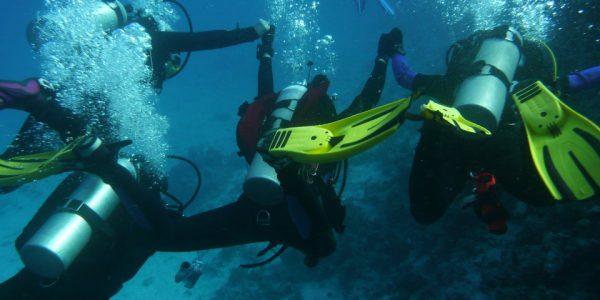 wyjazd nurkowy do Hurghady w Egipcie - SEALION